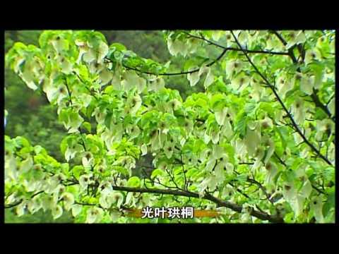 The Brief of Diqing Shangri-La's Scenic Spots
