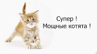 Супер ! Мощные котята !
