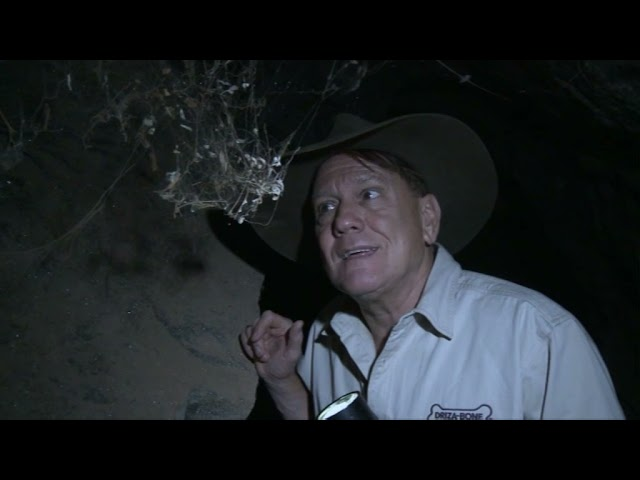 Cold Blooded Australians The Wildlife Man TV Series