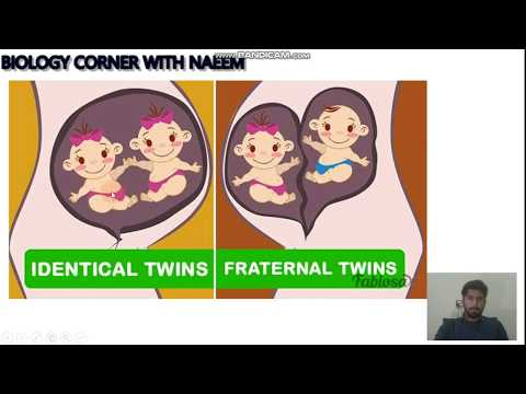 Explanation of Dizygotic Twins