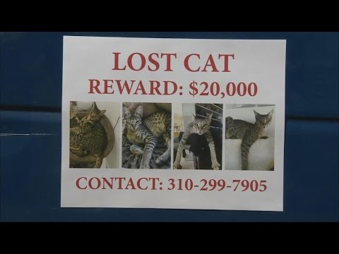 Thumbnail: Missing Cat's Owner Offers Whopping $20,000 Reward To Whoever Finds It