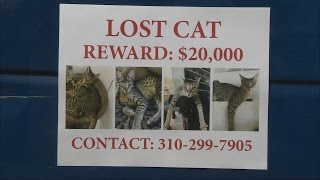 Missing Cat's Owner Offers Whopping $20,000 Reward To Whoever Finds It