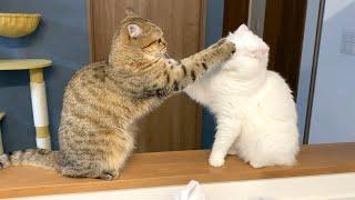 後輩猫のパンチが顔面にめり込んでしまいました…!