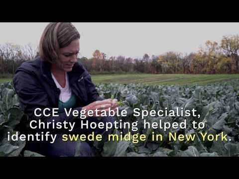 6 amazing benefits of garlic