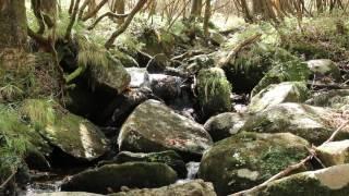 2016年秋ー栃木県横根高原(井戸湿原)の沢(その2)