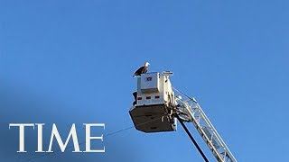 Bald Eagle Lands On Fire Truck During 9/11 Ceremony: Doesn't Get Much More Symbolic Than That | TIME