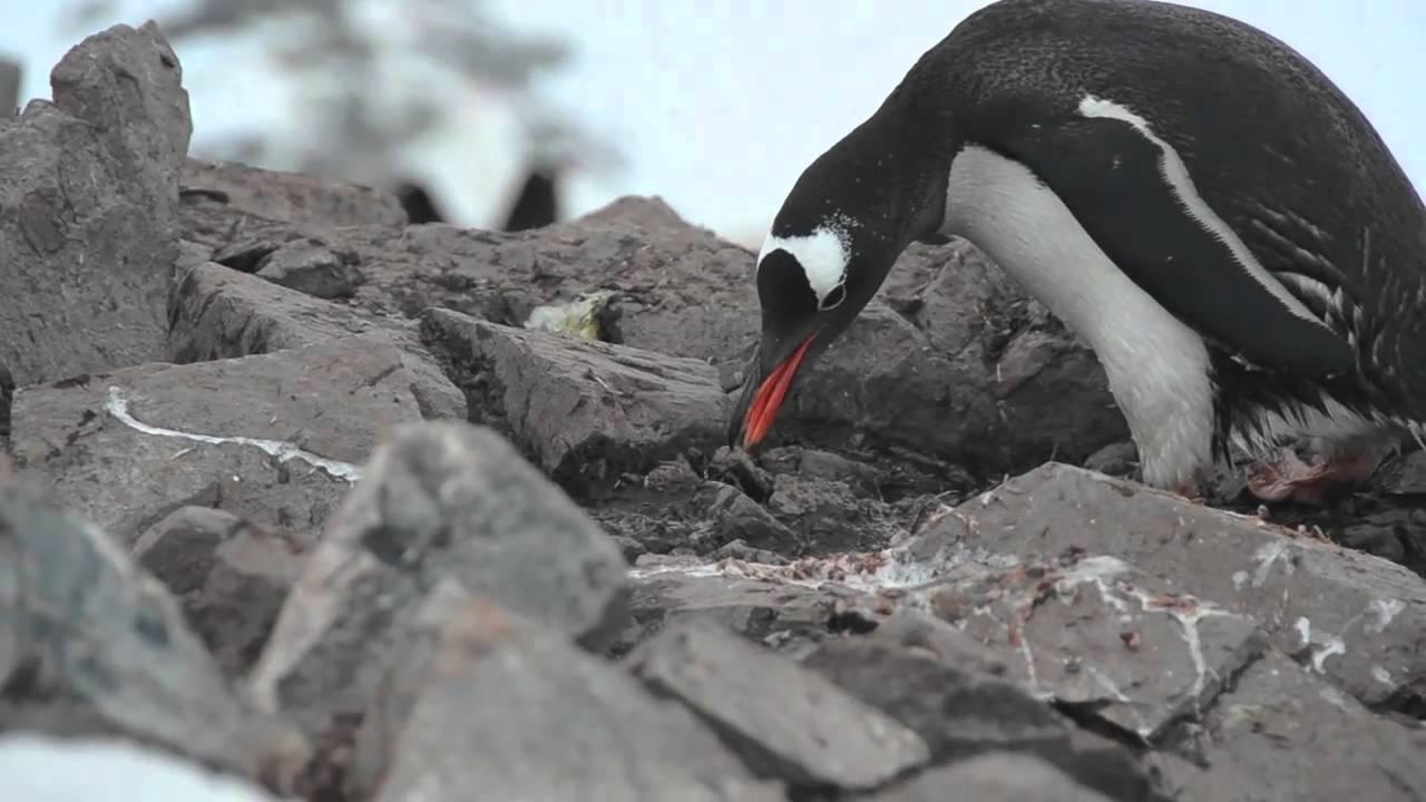 how to go to penguin island
