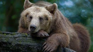 �������� ���� Политическая сказка про Медведя ������