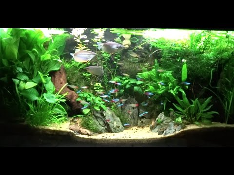 38 gallon planted community aquarium update 10 youtube for 38 gallon fish tank