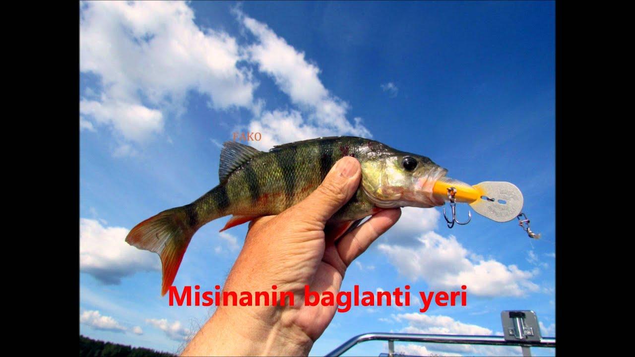Cercopagis Pengoi Fish Hook Water Flea Youtube