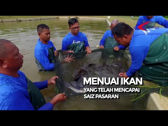Langkah-Langkah Menghadapi Jerebu Bagi Nelayan & Penternak Akuakultur