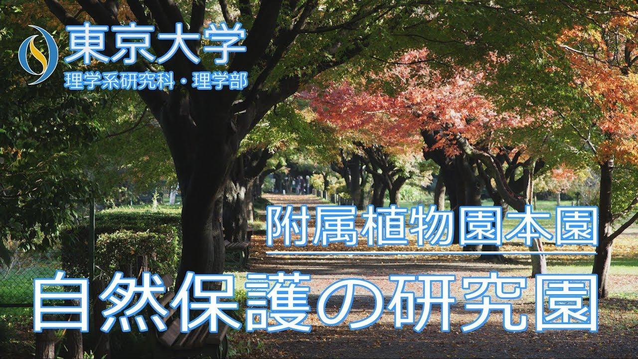 植物園 小石川