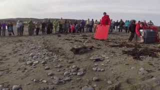 Harbor Seals Released Back Into the Wild