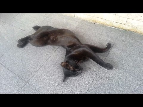 'Cats Sleeping in Awkward Positions Compilation' || CFS