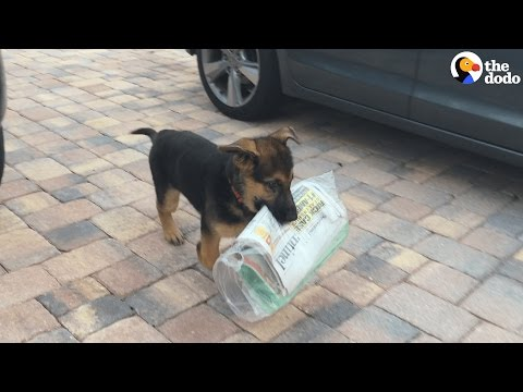 Dog Brings Family The Paper Every Morning | The Dodo