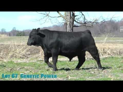 Lot 67  Genetic Power