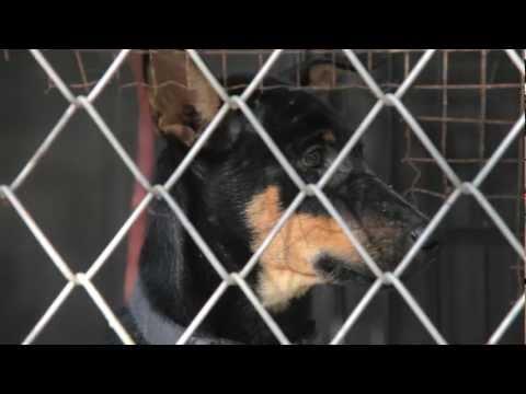 Lanta Animal Welfare - Dog and Cat Charity on Koh Lanta, Thailand