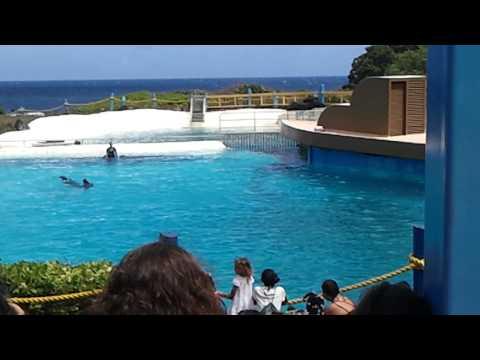 Sea life park Honolulu,Hawaii -2012-09-22
