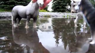 Schleich wolf movie Part 3 ( Nightmares and Night mustangs )