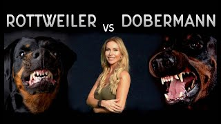THE DOBERMAN VS THE ROTTWEILER - WHO IS FIERCEST?