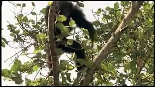 Забавные животные   СУПЕР фильм для детей и взрослых