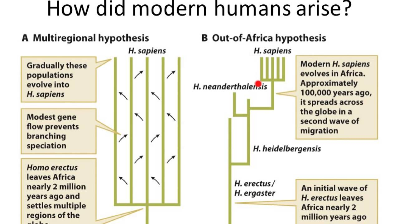 out of africa vs multiregional theory Multiregional hypothesis according to this theory, early hominins (homo erectus ) expanded to eurasia roughly 1 million  multiregional versus out of africa.