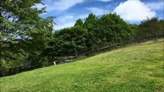 鳥居平やまびこ公園の無料ドッグラン