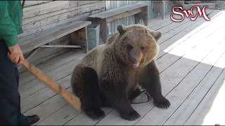 Savage Man Fights Wild Bear..then this happened..updated video