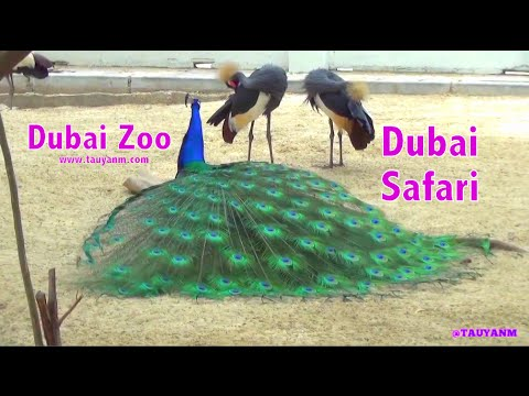 Travel Vlog: Dubai Safari - Dubai Zoo | @tauyanm