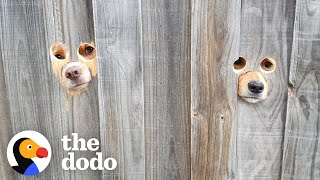 """Dad Cuts """"Peepholes"""" Into Fence So Dogs Can Say Hi To Mom 