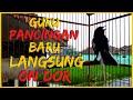 Suara Kacer Poci Gacor Konslet Ngeluarin Isian Mewah Cocok Untuk Memancing Kacer Yang Susah Bunyi  Mp3 - Mp4 Download