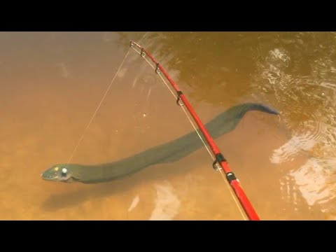 Fishing For Electric Eel And Other Small Fish Species In The Jungle