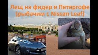 Лещ на фидер в Петергофе (рыбачим с Nissan Leaf)