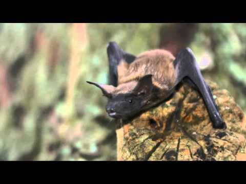 Kelly Brown - Fun Facts about Bats