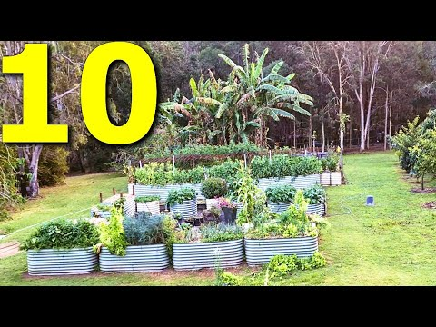 10 Vegetables You Should ALWAYS Grow