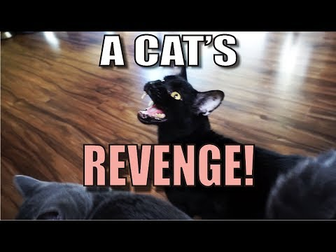 Talking Kitty Cat 55 -  A Cat's Revenge