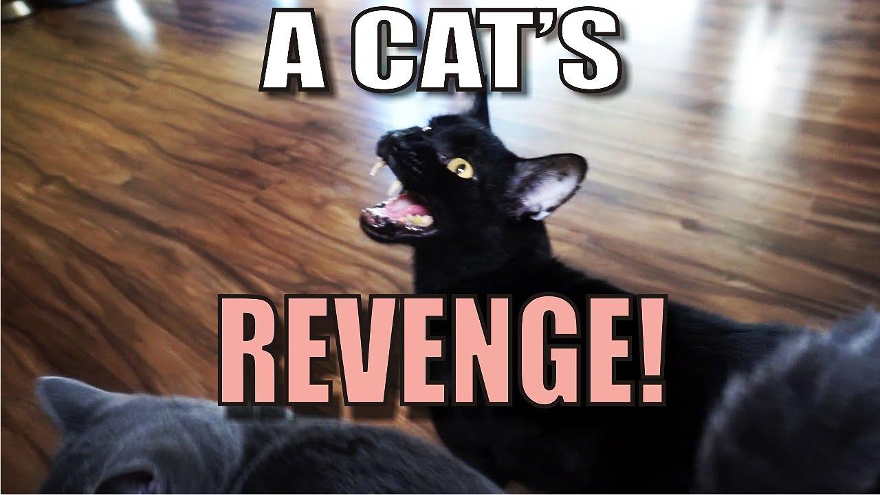 talking-kitty-cat-55-a-cat-s-revenge