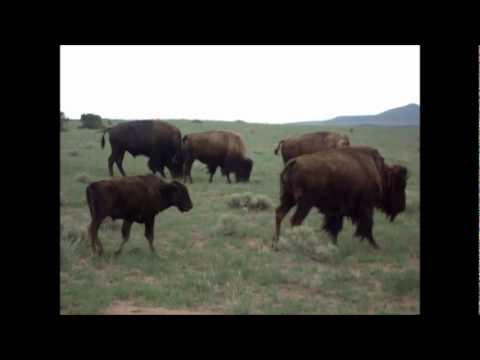 Original Music: Where The Buffalo Roam