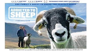 Addicted to Sheep - Trailer thumbnail