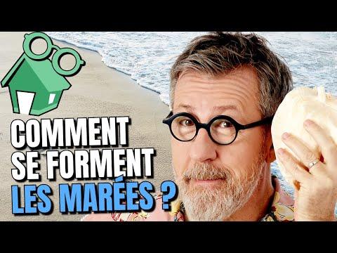 🌊 Comment se forment les marées ?