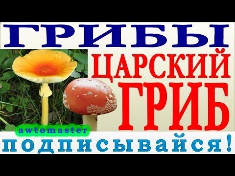 Грибы 2013, царский гриб или гриб Цезаря