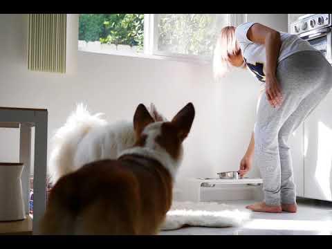 NEW Furbo Dog Camera | Smart Dog Alerts