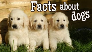 Dog Facts for Kids