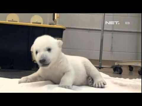 Anak Beruang Terkejut Serius Lucu Doovi