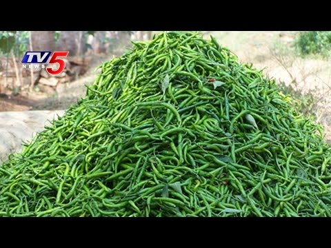 Mirchi Production Increases Due To Prices Goes up | Guntur | Annapurna | Telugu News | TV5 News