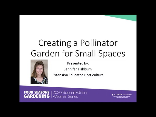 Pollinator Gardens for Small Spaces