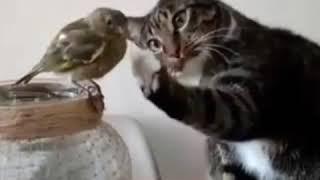Смотри, какая красота; прикол с котом и птичкой!