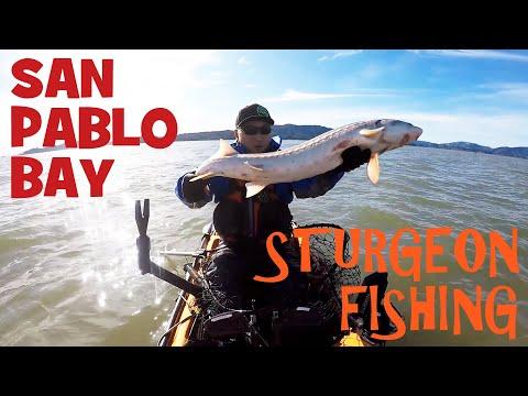 San Pablo Kayak Sturgeon Fishing On My Hobie Revolution 13
