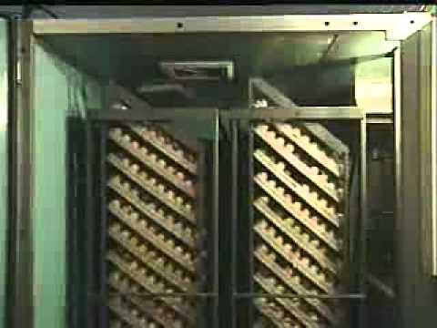 Chicken poultry hatching technology by automatic incubator