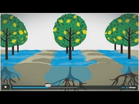 What is Narrow Border Flood?